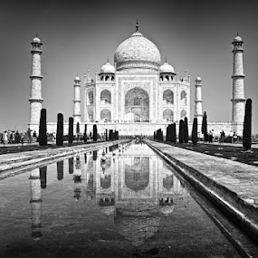 The Taj by Infected Gallery - Buildings & Architecture Statues & Monuments ( taj, structure, taj mahal, agra, monument, architecture )