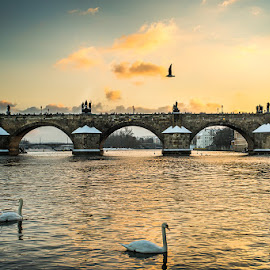 Evening sun in Prague by Silviu Pal - Buildings & Architecture Statues & Monuments ( water, beautiful, vltava, charles, sun, photography, sky, sunset, emotions, swan, bridge, prague, evening )