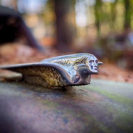 Cadillac Hood Ornament - Old Car City - White, GA by Mike Boening - Transportation Automobiles ( old, hood ornament, hdr, cadillac, 1956, white, atlanta, ga, old car city, olympus omd em1, cars, junkyard, rust, abandoned )