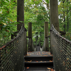 Bridge by J & M - City,  Street & Park  City Parks ( wood, leafs, park, green, illustration, trees, image, bridge, view )
