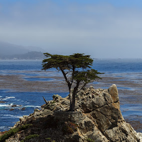 by Anthony Schwab - Landscapes Mountains & Hills ( anthony schwab, california, trees, ocean, us, travel, salinas, landscape, monterey county )