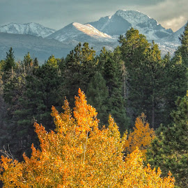 Snow on the Mountain, Fall in the Valley by Penny McWhirt - Landscapes Mountains & Hills ( snow, rockies, gold, fàll, aspen )