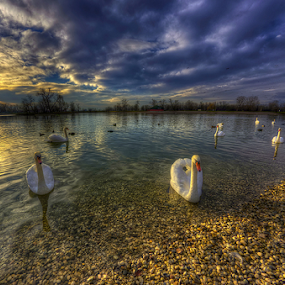 Swan lake by Boris Frković - Landscapes Waterscapes