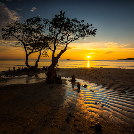 The Couple by Ade Noverzan - Landscapes Beaches ( padang, sunset, trees, beach, dusk )