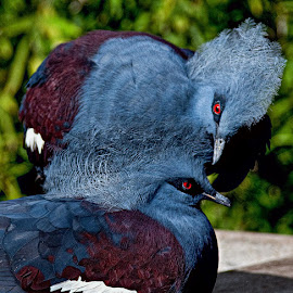 Are you listening to me? by Brent Morris - Animals Birds