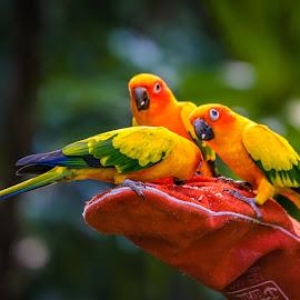 Feeding Time by Carol Plummer - Animals Birds ( animals, colorful, feeding, birds )