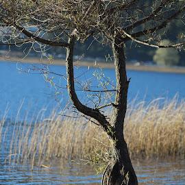 by Sveta Celik - Landscapes Waterscapes