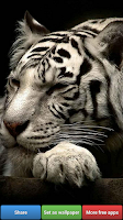 Screenshot of Big Cats HD Wallpapers