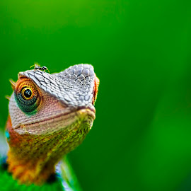 Green Forest Lizard by Buddhika Jayawaredana - Animals Reptiles ( natural light, detail, lizard, nature, green, nature up close, sri lanka, natural, close up, eye,  )