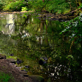 down by the riverside by Nic Scott - Nature Up Close Water ( riverside, trees, woodland, river )