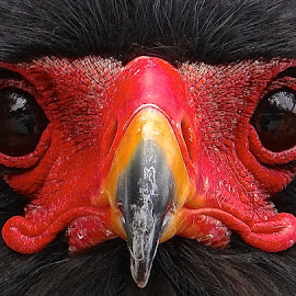 by Steven Aicinena - Animals Birds (  )