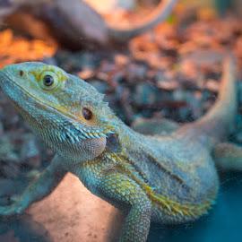 by Benghazi Sky - Animals Reptiles