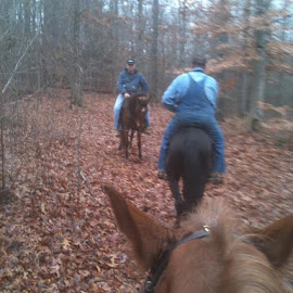 Ok horse people go ahead and get jealous! Another ride today in between the rain drops! Nothing like smelling horses and leather! by Tina Wooley - Animals Horses