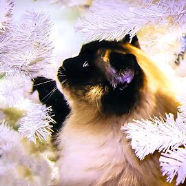 by Carla Chidiac - Animals - Cats Portraits