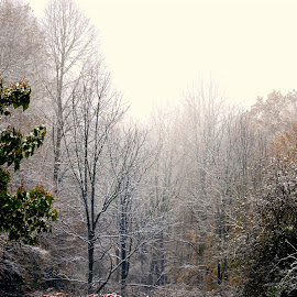 A Little Snow and Ice in these WV Hills ! by Linda Blevins - News & Events Weather & Storms ( fall colors, bushes, snow, weather, trees, rain,  )