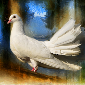 Royal White Pigeon by Daliana Pacuraru - Mixed Media All Mixed Media ( pigeon, royal, mixed media, white, painting,  )