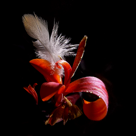 *** by Jurijs Ratanins - Instagram & Mobile Android ( mobilography, nature, flowers, light, feather )