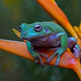 #2 by Yadi Setiadi - Animals Amphibians