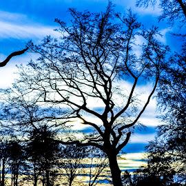 October afternoons. by Lyndsay Hepburn - Nature Up Close Trees & Bushes ( tree, tree and autumn sky, tree and sky, dusk tree, tree sillouhette )