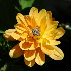 Wedding Accessories by Bill Waterman - Wedding Details ( ring, wedding, landscape, leaves, flower,  )