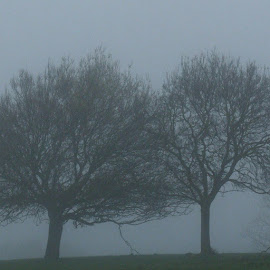 Winter by Glenn Mostert - Landscapes Weather ( fog, mist )