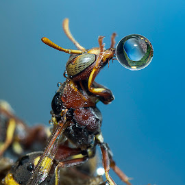 Wasp Blowing Water Bubble 141222A by Carrot Lim - Animals Insects & Spiders