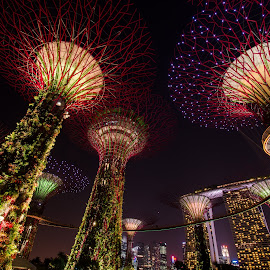 Garden By The Bay by Qing Hui Teo - City,  Street & Park  City Parks ( gardenbythebay, nightscene, cityscape, garden, singapore, city )