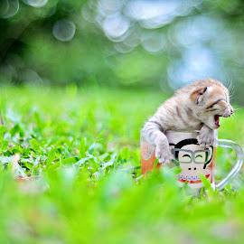 by Noor Helmie - Animals - Cats Kittens