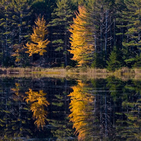 Mirror pond, Acadia by Gale Perry - Landscapes Waterscapes ( fall, color, colorful, nature,  )