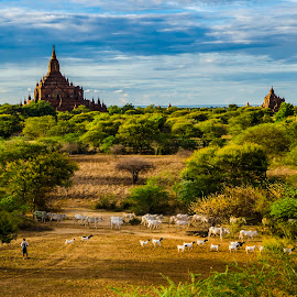 The cowherd by Khun Myo Than Htun - Landscapes Travel ( clouds, trees, people, stupa, cows )