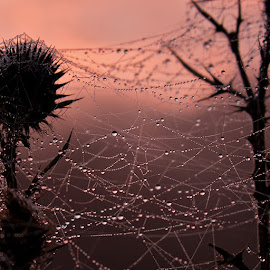 by Marcel Socaciu - Nature Up Close Natural Waterdrops