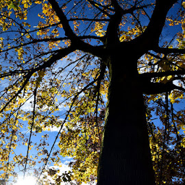 A sun ray by Yannick Faven - Nature Up Close Trees & Bushes ( nature, tree, autumn, nature up close, nature close up, sun )