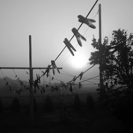 Pesunöör varahommikul, minu teine pilt mustvalgete fotode seeriast, väljakutsujaks Kadri. Meenutan, et igaüks, kes soovib, võib ennast minu poolt väljakutsutavaks pidada ja postitada Facebooki viie päeva jooksul iga päev ühe mustvalge foto. by Erkki Liba - Abstract Light Painting