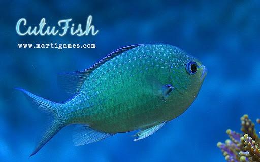Cutu-Fish-1