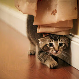 Sneaking Around by Danny Rotondo - Animals - Cats Kittens (  )