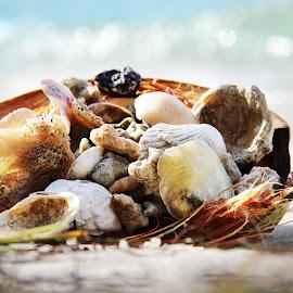 Seashell paradise by Ekaterina Aleksandrovna - Nature Up Close Sand ( seashell, ocean, seashells, paradise, sea shore )