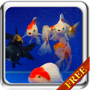 Download android app gold fish video live wallpaper for for Live fish games