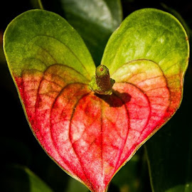Love by Nicole Nichols - Nature Up Close Leaves & Grasses ( plant, heart, nature, leaf,  )