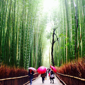 Bamboo rain by Jeff Adams - Novices Only Street & Candid