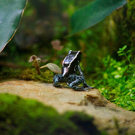 by Carrie Karki - Animals Amphibians