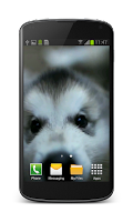Screenshot of Little Puppy Video Wallpaper