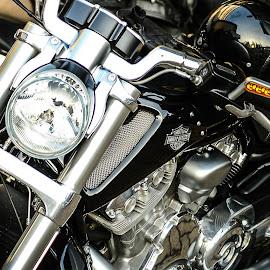 harley davison by Ariel Jerard V. Arias II - Transportation Motorcycles ( harley davidson )