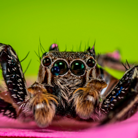 Spider Split by Dave Lerio - Animals Insects & Spiders
