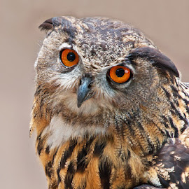 Watching you. by Max Möhr - Animals Birds