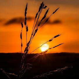 La espiga by Jose German - Landscapes Sunsets & Sunrises (  )