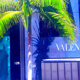 Valentino by Ronnie Caplan - City,  Street & Park  Markets & Shops ( purple, store, green, display, leaves, photo, shadows, sign, palm tree, beverly hills, trunk, window, billboard, rodeo drive, man )