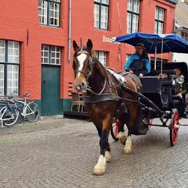 Bruges, Belgium by Lynnie Keathley - Animals Horses