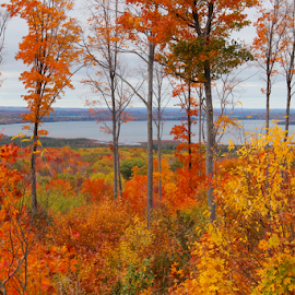 Northern Michigan in the Fall by Sean Doran - Landscapes Forests ( northern, michigan, skegemog, fall, traverse, leaves, traverse city )