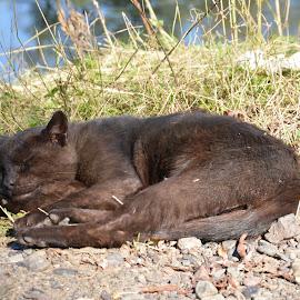 Sleep by Drago Ilisinovic - Animals - Cats Portraits ( animals, cat, portrait )