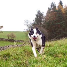 Run boy !!! by Linda Macdonald - Animals - Dogs Running